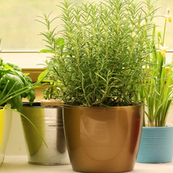 Several containers of potted herbs on a sunny window sill.