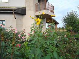 Jerusalem artichoke flowers in my garden