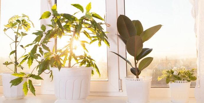 House plants on a windowsill