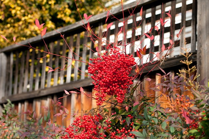 fall foliage with berries