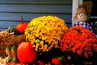 An arrangement of hay, pumpkins, and flowers, featuring a scarecrow.