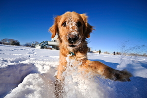 Winter Health and Safety Tips for Dogs