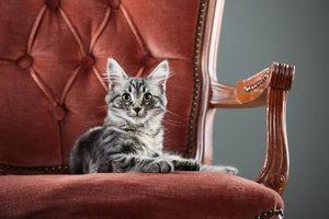 A kitten sitting on an antique chair.