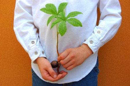 how to grow sapling from seed