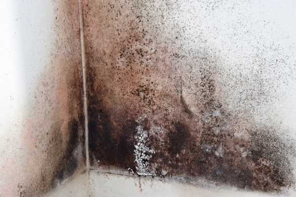How To Clean Black Mold Off Of Walls