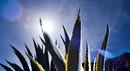 Agave plant.jpg