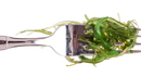 24_Algae.jpg