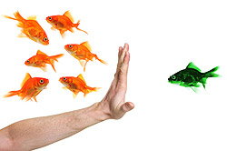 Gold fish and Green fish