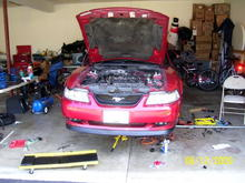 My stang during surgery