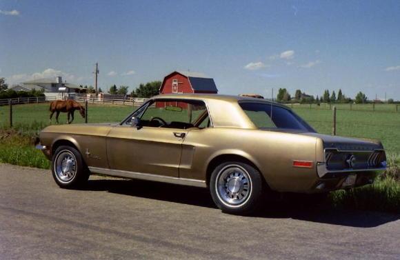 Mustang on Mazzepa Road Best
