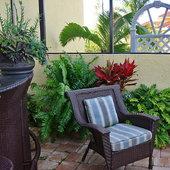 Macho Fern and Tye Plants - How relaxing!