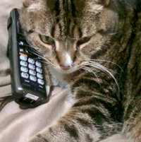 """Socks likes props!  She was laying very close to the phone, but it was upside down. All I did was turn it right side up and she just rested her head on it!  """"If I'm lyin', I'm dyin' !"""" (Jeff Foxworthy)"""
