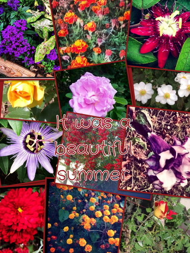 A collage of some of the flowers I grew this year.