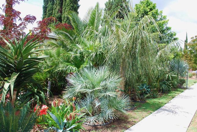 Shot of front yard palm mess