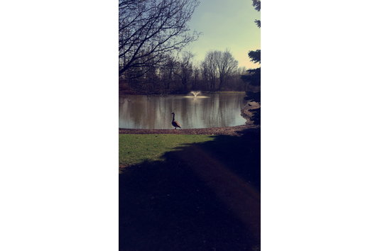 Lakes Edge Apartments Pickerington