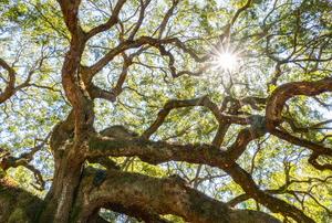 tall beautiful tree in the sun