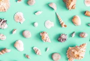 natural interior design with sea shells on a bright teal wall