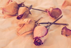 Several dried roses lay on a fabric-covered surface.