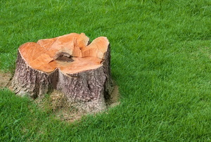 stump surrounded by lawn
