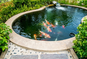 garden pond with fish swimming