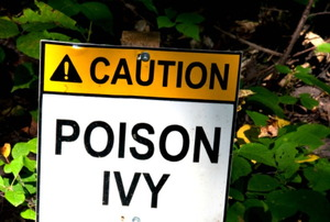 A poison ivy warning sign