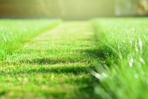 A lawn.