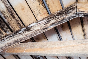 moldy wooden attic roof