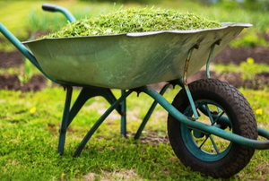 pile of grass trimmings in wheel barrow