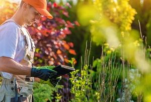 landscaper with garden checking tablet