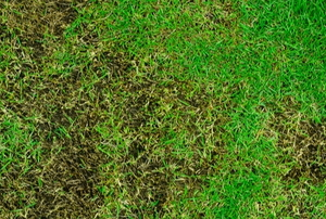 grassy lawn with dead patches