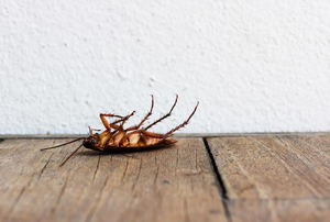 An upside down cockroach on a wood floor.