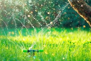 sprinkler on sunny lawn with tree