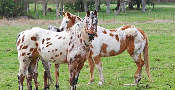 Image of horses.