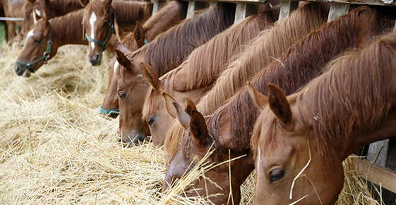 Image of horses eating.