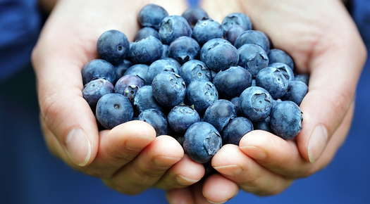 Image of hands holding blueberries.