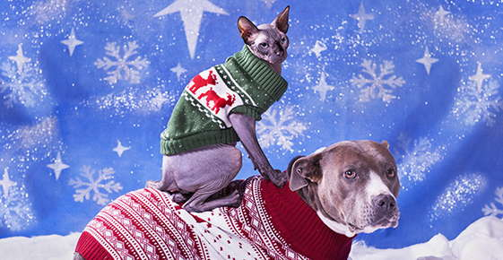 Image of a cat and dog wearing winter sweaters.