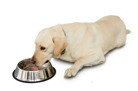 Image of a fat dog.