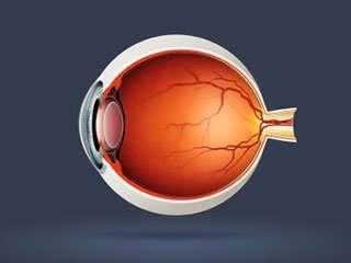 Vector image of an eyeball.