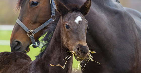 Image of mother and foal.