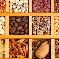 many different dry beans