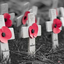 Small white crosses with remembrance poppies