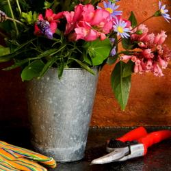 Gifts for organic gardeners