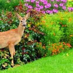 deer standing in front of a flower garden