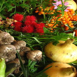 Colorful mixed vegetables and fruits