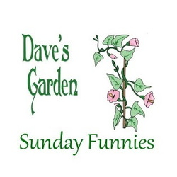 Sunday Funnies vine and flower logo