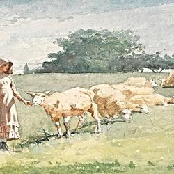 woman in sunbonnet tending sheep