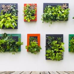 Vertical gardening planters indoors.