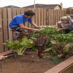 A family planting a garden