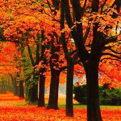 orange autumn leaves on road
