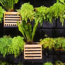 vertical garden with ferns